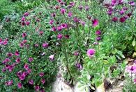 Garden Granada Maureen