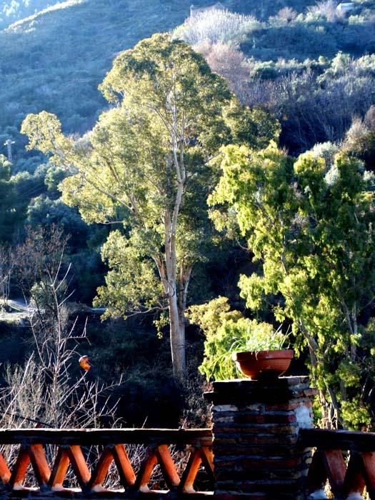 Glistening morning Granada